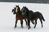 Oil Painting Stylized Photo Of Horses Walking In The Snow