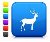 Deer Icon on Square Internet Button Collection