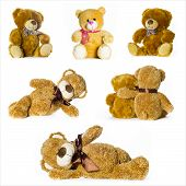 image of teddy  - beutiful collage of different toy teddy bears - JPG