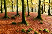 Autumn magic forest on the shores of Lochness, Scotland, Europe