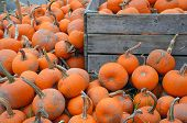 Piles Of Pumpkins