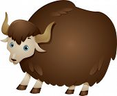 foto of yaks  - Illustration of a Yak with a Thick Wooly Coat - JPG