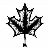 Decorative Silhouette Maple Leaf
