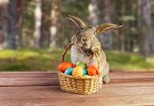 Easter Rabbit Sits With Basket Outdoor