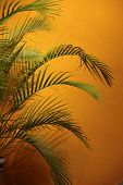 Palm Tree Fronds Against A Glowing Orange Wall
