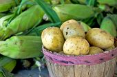 potatoes and sweet corn