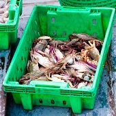 Crabs In The Green Plastic Box On The Fish Market