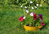 pic of wash-basin  - ideas for garden - flowers in old wash-basin ** Note: Soft Focus at 100%, best at smaller sizes - JPG