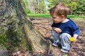 Young Boy Looking At A Tree