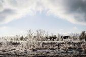 Frozen Landscape After An Ice Storm