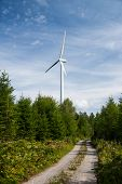 wind power plant in the forest