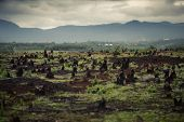 picture of slash  - Stumps on the valley caused by deforestation and slash and burn type of agriculture of Madagascar - JPG