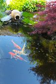Koi fish in a small decorative pond