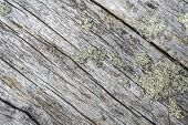Texture of old wood background closeup
