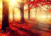 Autumn. Fall scene. Beautiful Autumnal park. Beauty nature scene. Autumn Trees and Leaves, foggy forest in Sunlight Rays