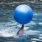Dolphin Show In The Water Park
