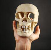 Human skull in hand on dark background