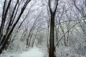 Snowfall Hiking Trail Illinois