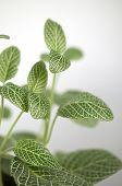Green and White Leaf Houseplant