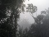 Sundarbans: Dawn in the jungles