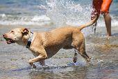 Dog playing at the sea
