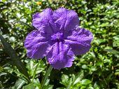 Fever Root Flower.