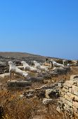 Ancient lions on Delos. Archaeological island in Greece