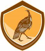 Turkey Walking Shield Retro