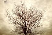 Dry Tree Branch With Rainy Cloudy Day