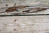 Weathered Wood Planks Detail