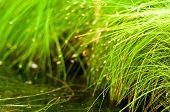 Green Grass Nature Background.