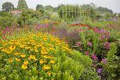 Abundance Of Colorful Flowers In Garden
