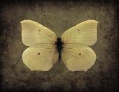 Vintage Grunge Butterfly
