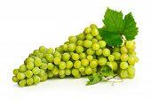 Large Brush Of White Grapes