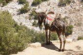 Traditional Greek Donkey. Rural Mode Of Transportation. Crete. Greece