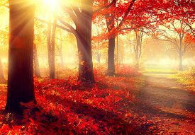 image of morning sunrise  - Autumn - JPG