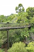 stock photo of tree snake  - Kirstenbosch Centenary Tree Canopy Walkway called the Boomslang  - JPG
