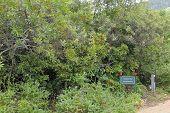 Van Riebeeck Tree And Shrub Hedge