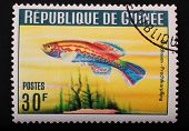 Guinea-circa 1964 Postage Stamp Printed In Republic Of Guinea Shows The Image With The Inhabitants O