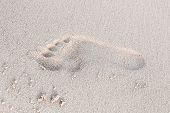 One Footprint In White Coastal Sand On Beach