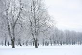 Winter View In The Park