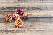 Beautiful Dried Roses On Wooden Background
