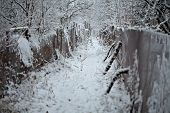 Winter Path Way