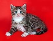 Small Fluffy Tabby Kitten Sitting On Red
