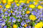 Floral Background With Blue And Yellow Flowers
