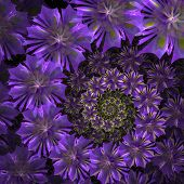 Spiral Flower Background. Purple Palette. Computer Generated Graphics.