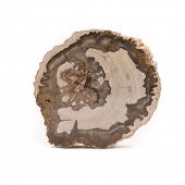 pic of petrified  - Front view of a slice of petrified wood found in Madagascar - JPG
