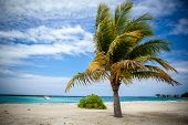 Palm Tree In Harbor