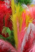 Close up shot of colorful feathers