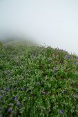 Morning mist with wildflowers